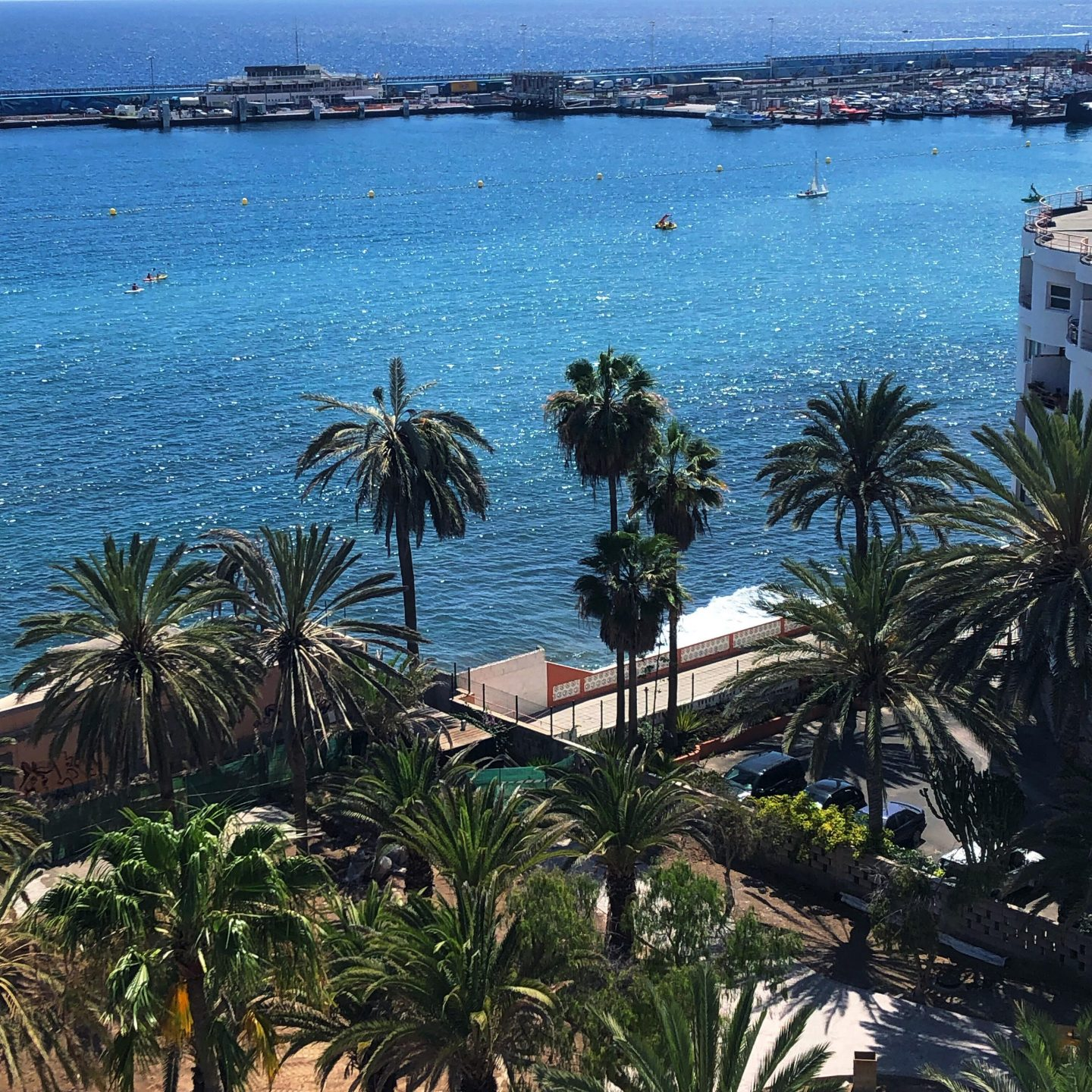 The Sea and Palm Trees